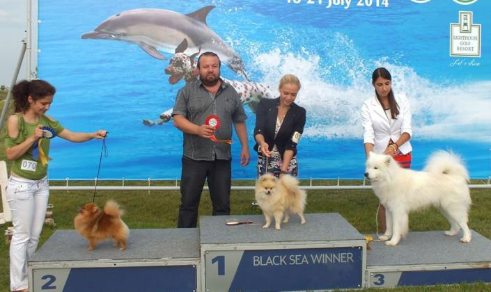Ruby on the dog show-20 july 2014